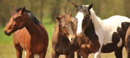 Verbindung zu mir selbst, anderen Menschen und den Pferden