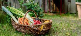 Unerfüllter Kinderwunsch und Ernährung